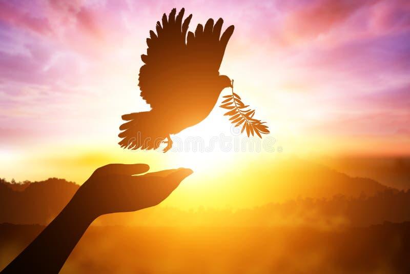 Silhueta de um desejo da mão à pomba fotografia de stock