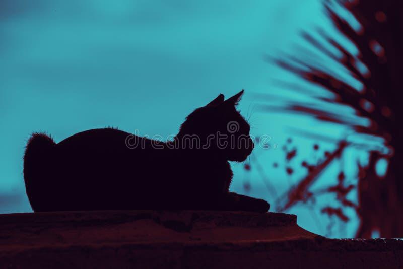 Silhueta de um gato que encontra-se perto da palmeira fotografia de stock