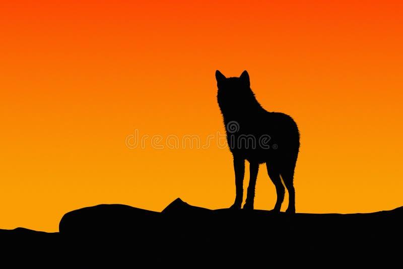 Silhueta de um lobo fotografia de stock