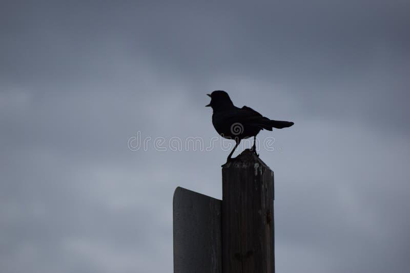 Silhueta de um pássaro de mar em um cargo na praia imagens de stock