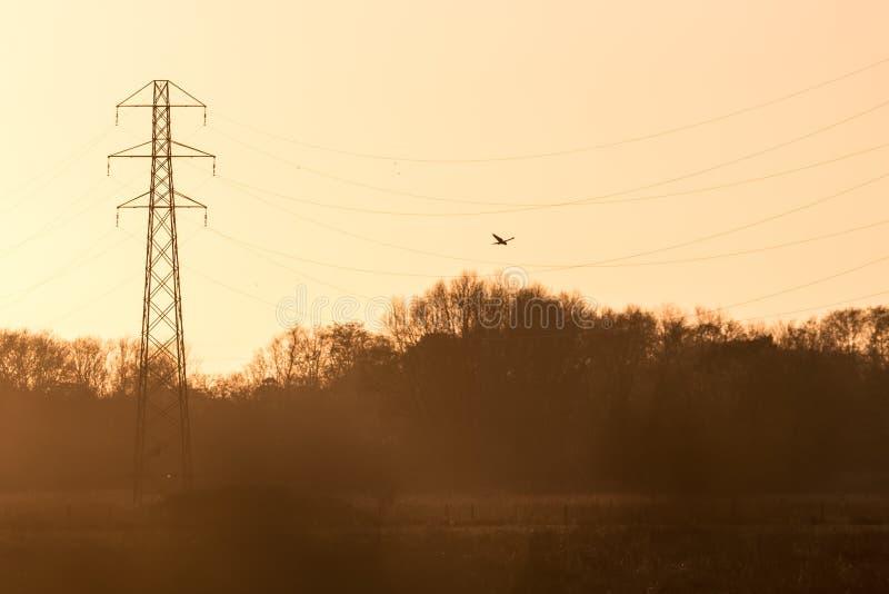 Silhueta de um tinnunculus de Falco da ave de rapina do falcão do francelho foto de stock royalty free