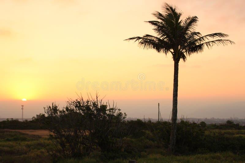 Silhueta de uma árvore de coco fotos de stock royalty free