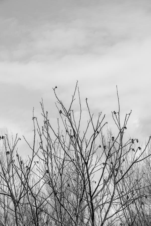 A silhueta de uma árvore desencapada cobre contra um céu sombrio do dia de inverno fotos de stock