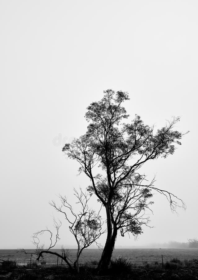 Silhueta de uma árvore em preto e branco contra um céu nevoento da manhã imagens de stock