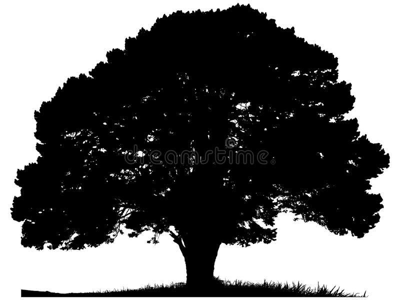 Silhueta de uma árvore solitária ilustração stock