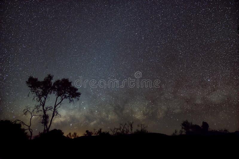 Silhueta do australiano Outback em frente à via leitosa e luz zodiacal foto de stock royalty free