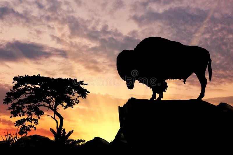 Silhueta do búfalo fotografia de stock
