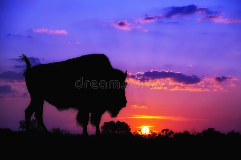 Silhueta do búfalo no nascer do sol fotos de stock royalty free