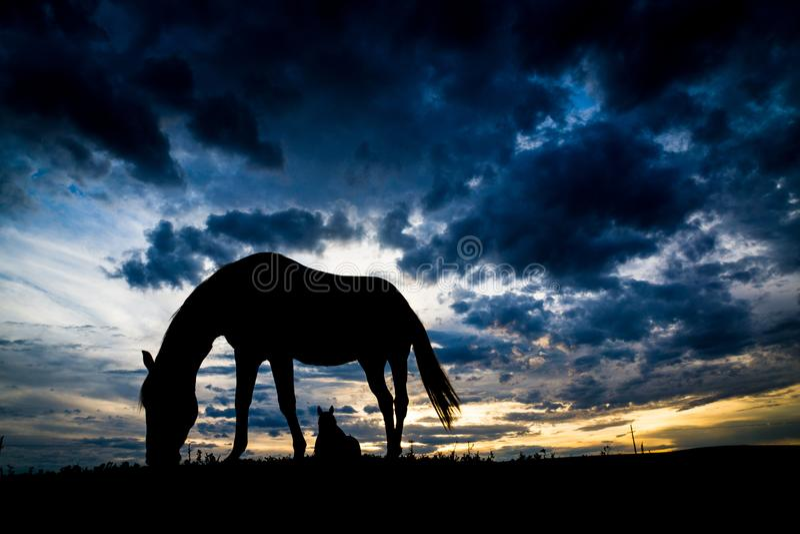 Silhueta do cavalo foto de stock