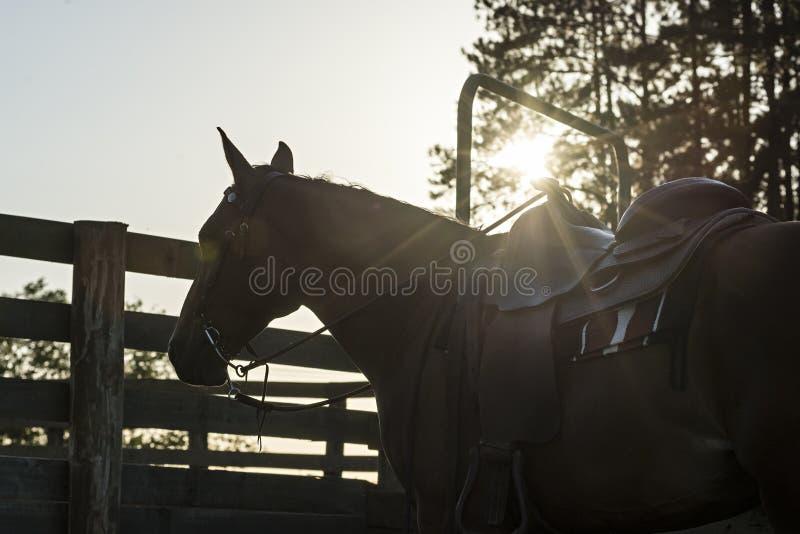 Silhueta do cavalo do vaqueiro imagens de stock