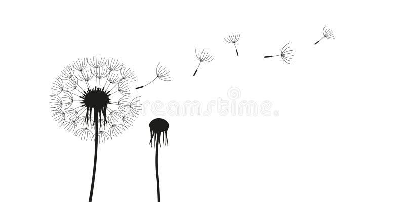 Silhueta do dente-de-leão com as sementes do voo isoladas no fundo branco ilustração royalty free