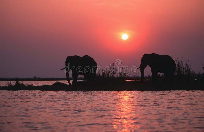 Silhueta do elefante imagem de stock royalty free