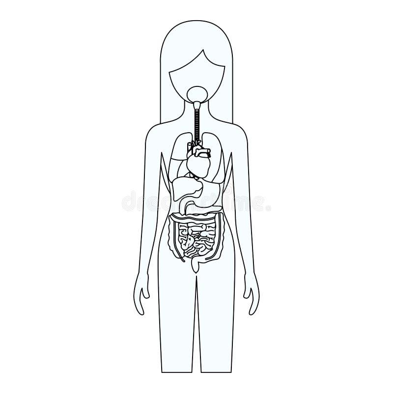 Silhueta do esboço da pessoa fêmea com sistema dos órgãos internos de corpo humano ilustração do vetor