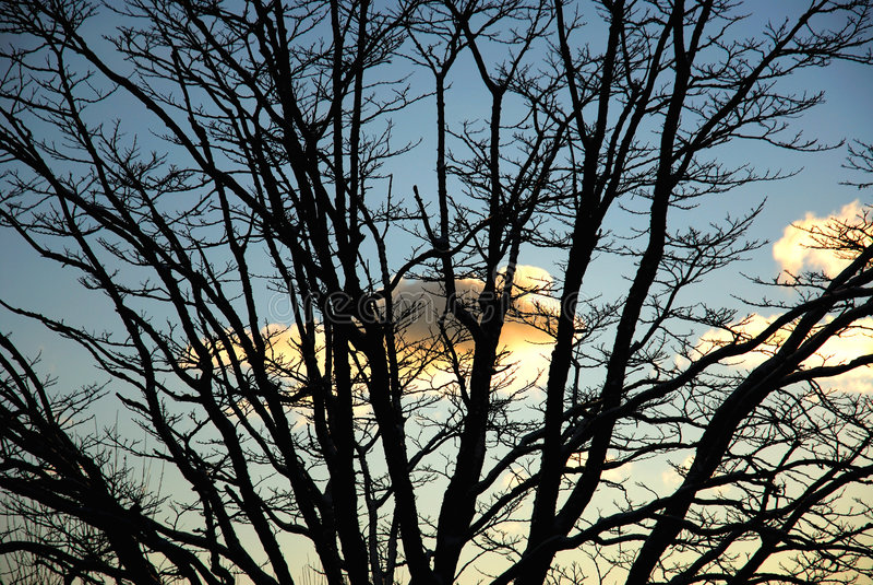 Silhueta do inverno fotografia de stock royalty free