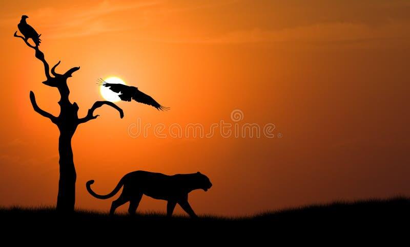 Silhueta do leopardo imagens de stock