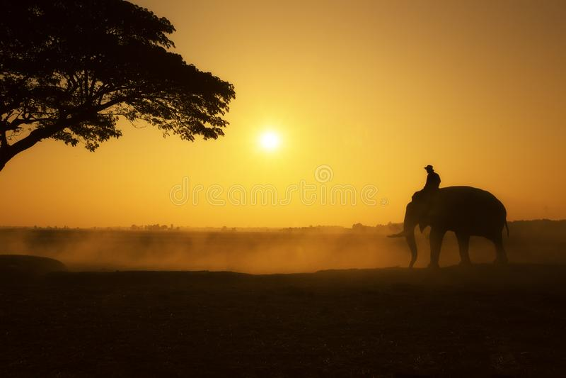 A silhueta do mahout e do elefante no tempo de manhã do campo imagens de stock royalty free