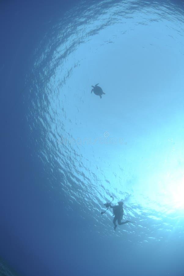 Silhueta do mergulhador e da tartaruga de mar imagem de stock