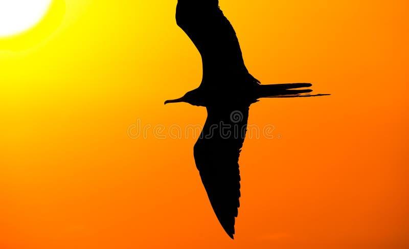 Silhueta do pássaro foto de stock