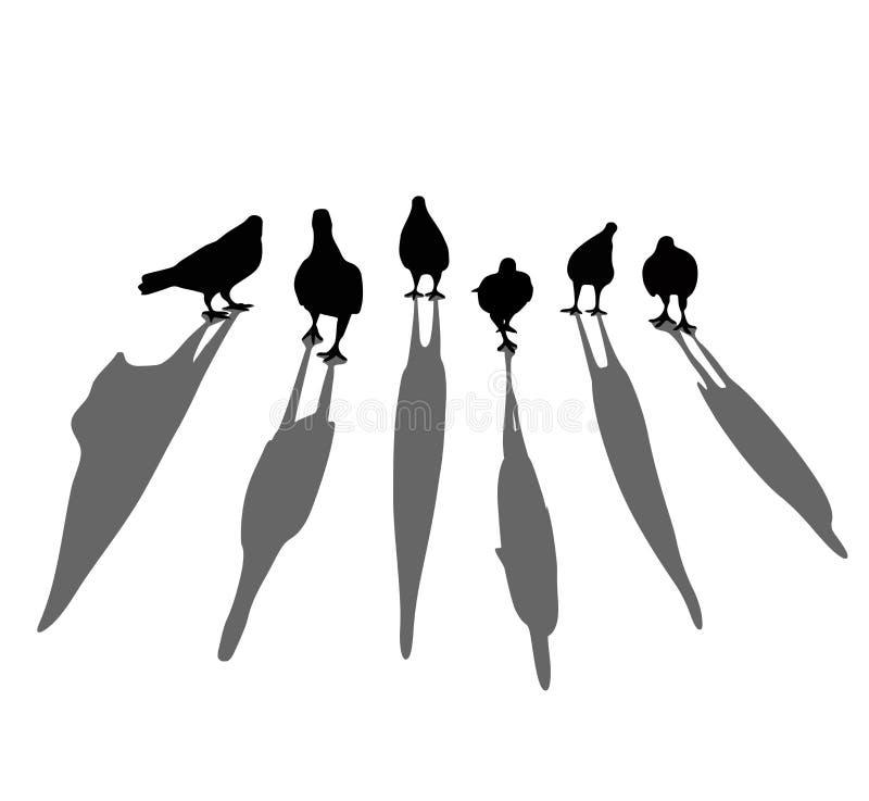 Silhueta do pássaro Pombo que anda no assoalho Olhe como grupos ilustração royalty free
