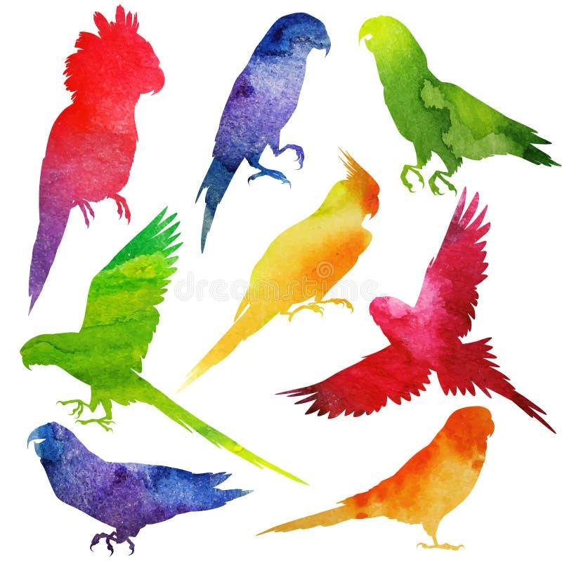 Silhueta do papagaio watercolor ilustração do vetor