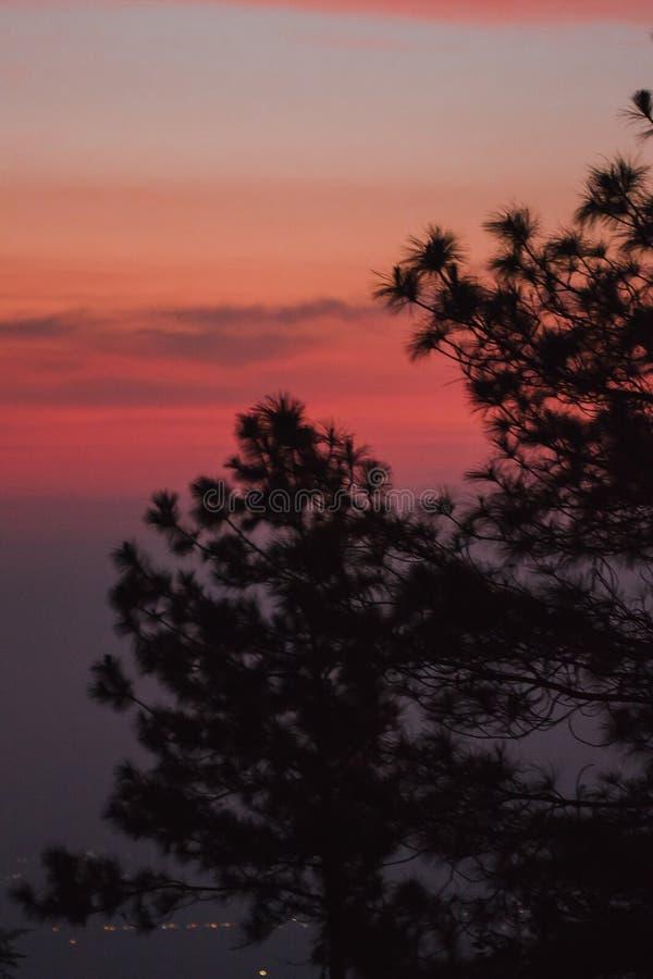 A silhueta do pinheiro fotos de stock