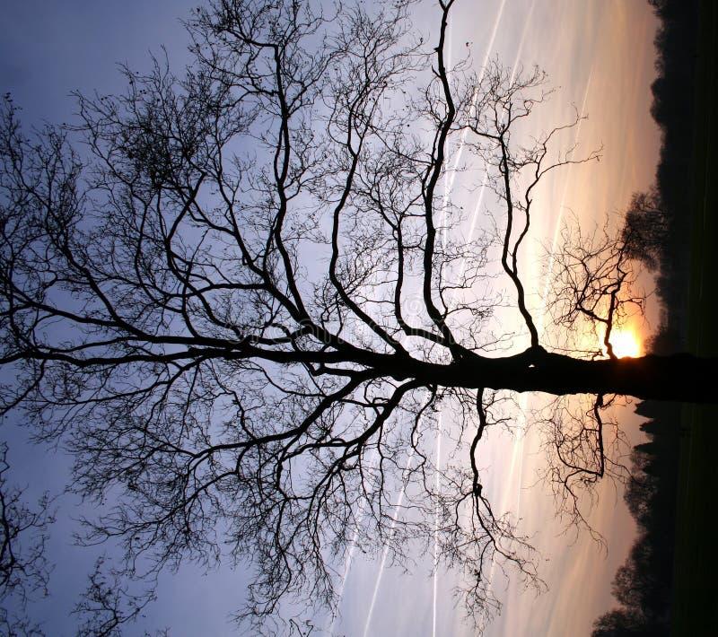 Silhueta do por do sol imagens de stock royalty free