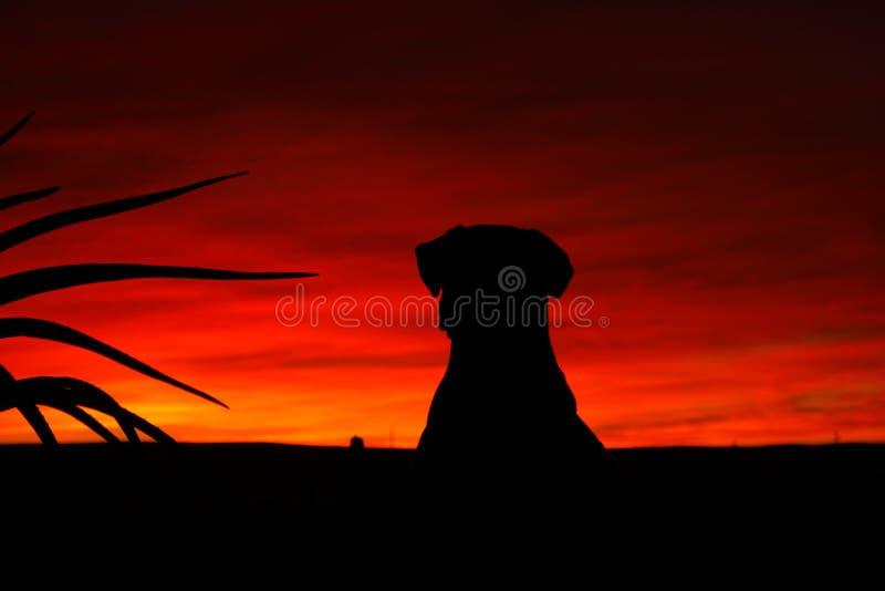 Silhueta do por do sol do cão foto de stock