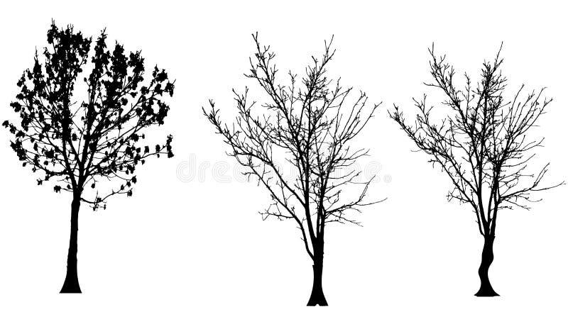 Silhueta do vetor da árvore ilustração stock