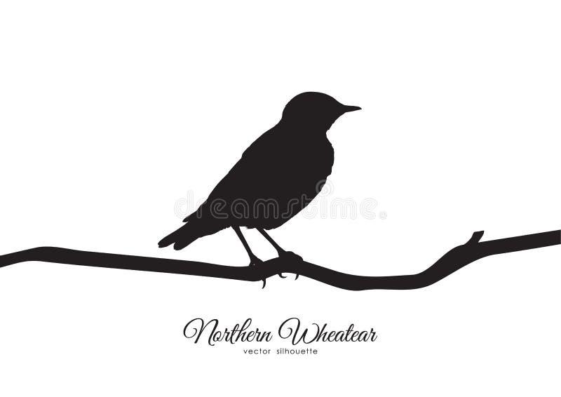 Silhueta do Wheatear do norte que senta-se em um ramo seco ilustração stock