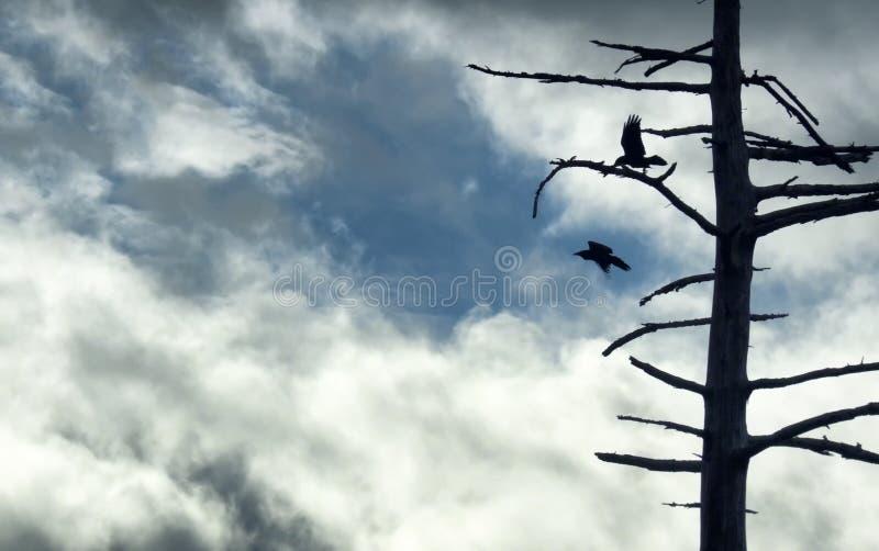 Silhueta dos corvos e da árvore contra o céu nebuloso imagem de stock royalty free