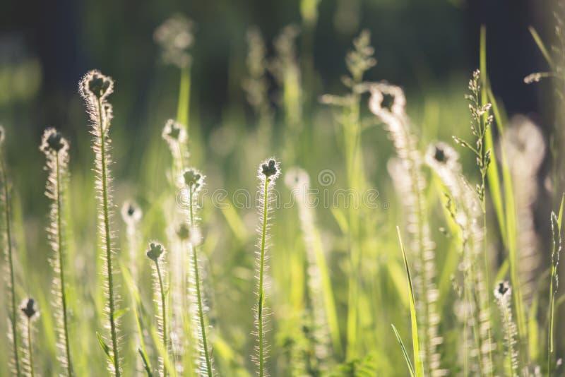Silhueta dos wildflowers no prado foto de stock