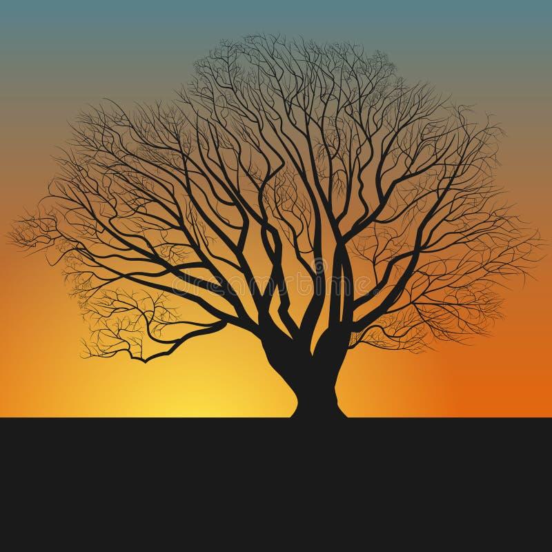 silhueta e anoitecer da árvore ilustração royalty free