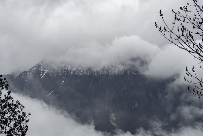 Silhueta e chuva da árvore sobre montanhas da floresta fotografia de stock