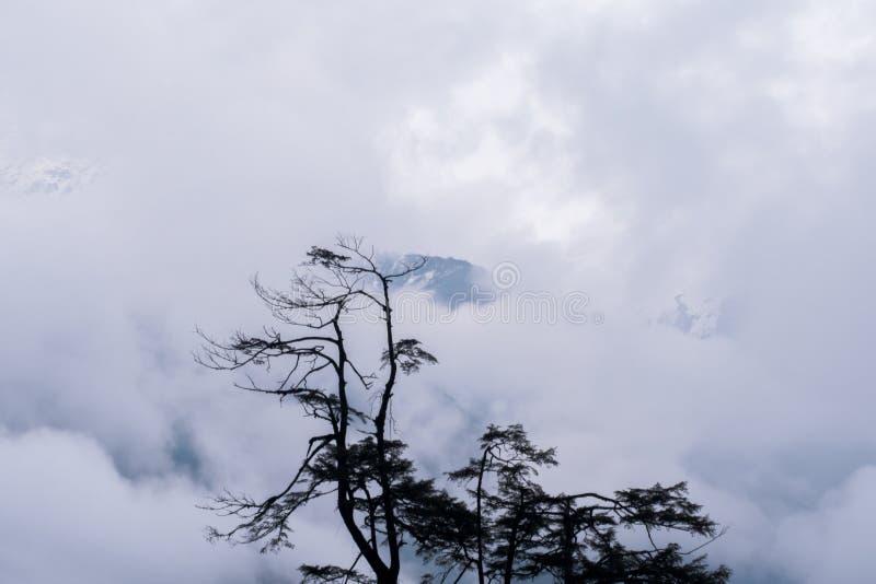Silhueta e chuva da árvore sobre montanhas da floresta fotos de stock royalty free