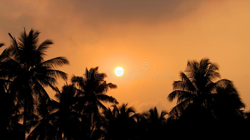 Silhueta e por do sol das palmas de coco foto de stock royalty free