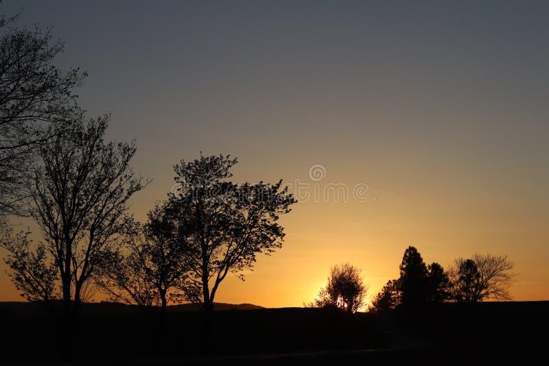 Silhueta escura das árvores e dos primos na perspectiva de um por do sol alaranjado Dobras da natureza da noite a um humor românt fotografia de stock