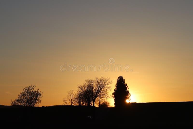 Silhueta escura das árvores e dos primos na perspectiva de um por do sol alaranjado Dobras da natureza da noite a um humor românt imagem de stock