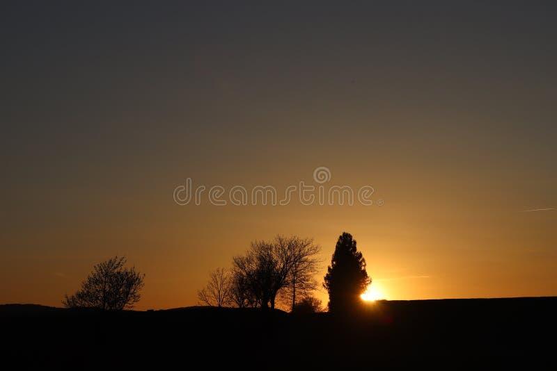 Silhueta escura das árvores e dos primos na perspectiva de um por do sol alaranjado Dobras da natureza da noite a um humor românt foto de stock royalty free