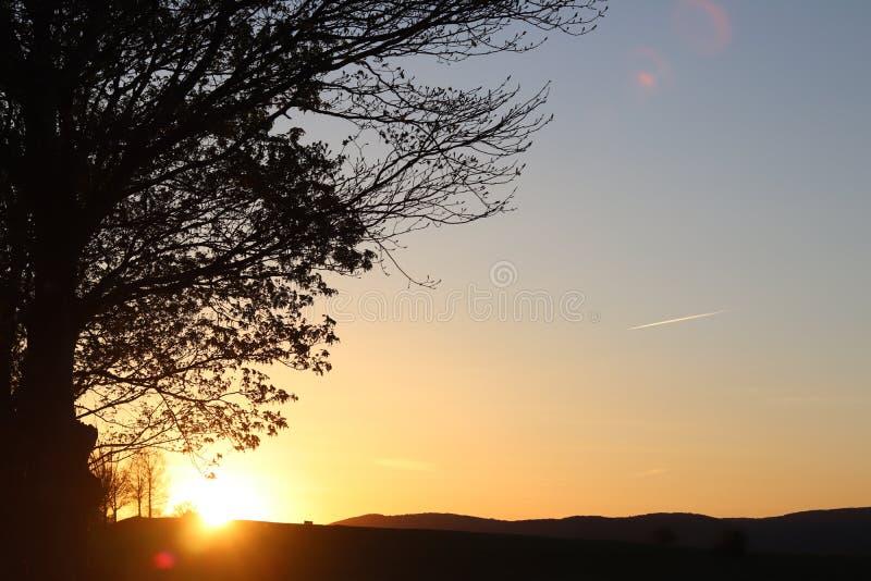 Silhueta escura das árvores e dos primos na perspectiva de um por do sol alaranjado Dobras da natureza da noite a um humor românt imagens de stock royalty free