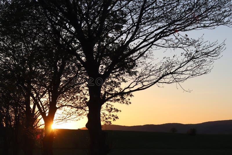 Silhueta escura das árvores e dos primos na perspectiva de um por do sol alaranjado Dobras da natureza da noite a um humor românt fotos de stock royalty free