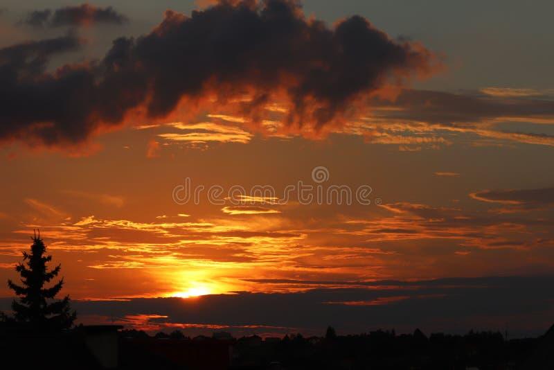 Silhueta escura das árvores e dos primos na perspectiva de um por do sol alaranjado Dobras da natureza da noite a um humor românt fotografia de stock royalty free