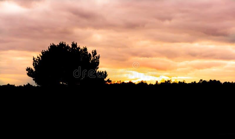 Silhueta escura de uma paisagem da urze com a árvore no pôr do sol, por do sol que colore o céu alaranjado e cor-de-rosa imagem de stock royalty free