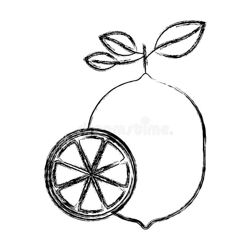 Silhueta grossa borrada de um corte do fruto do limão e do limão da metade ilustração royalty free