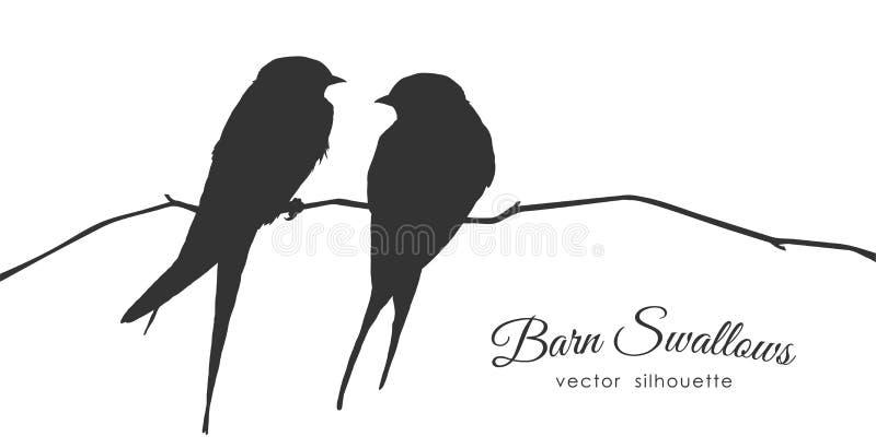 Silhueta isolada de duas andorinhas de celeiro que sentam-se em um ramo seco no fundo branco ilustração do vetor