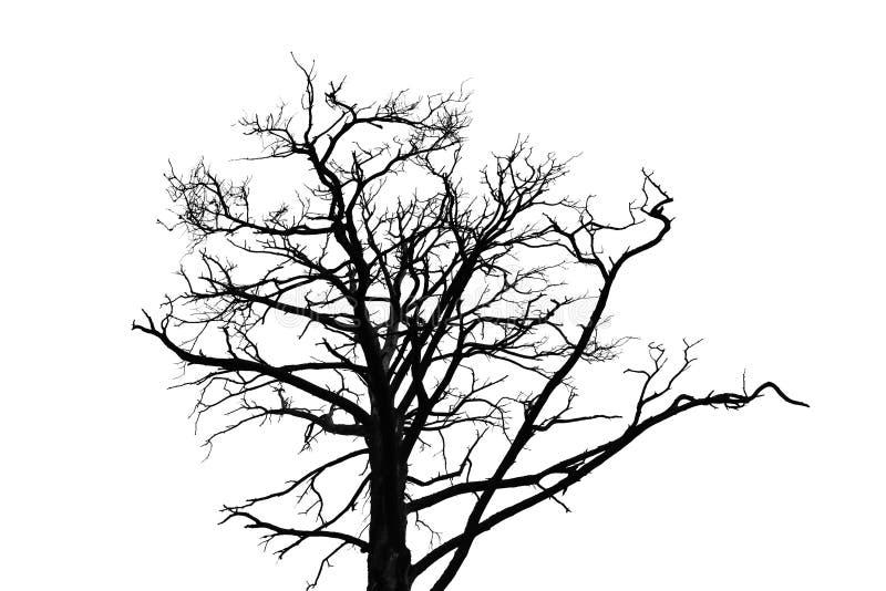 Silhueta leafless preta da árvore isolada no branco fotografia de stock