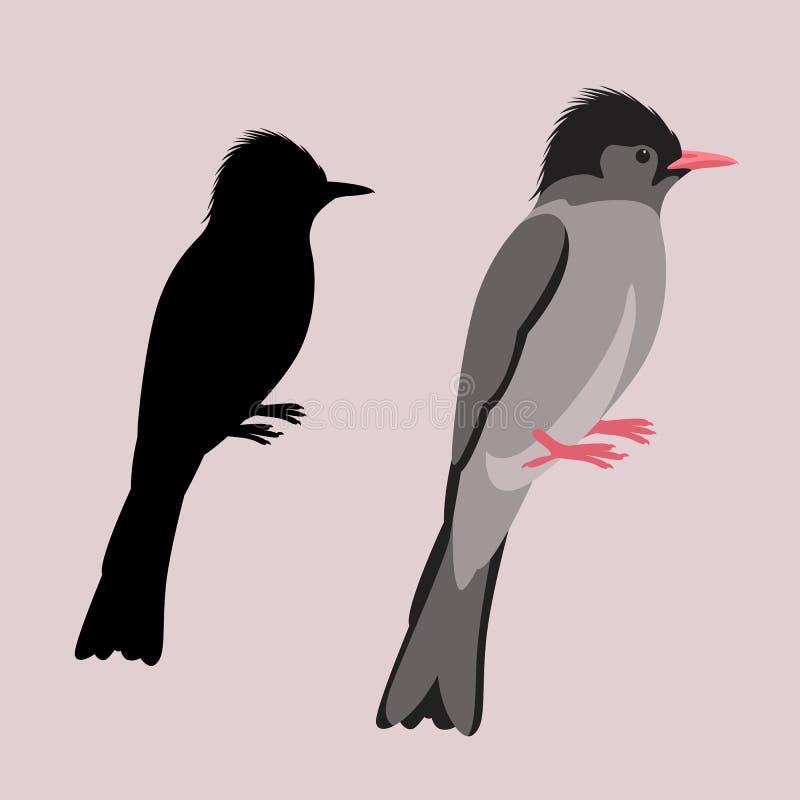 Silhueta lisa do preto do estilo da ilustração preta Himalaia do vetor do pássaro do bulbul ilustração do vetor