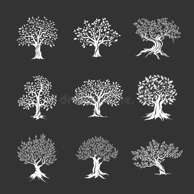 Silhueta magnífica da azeitona e dos carvalhos ilustração stock