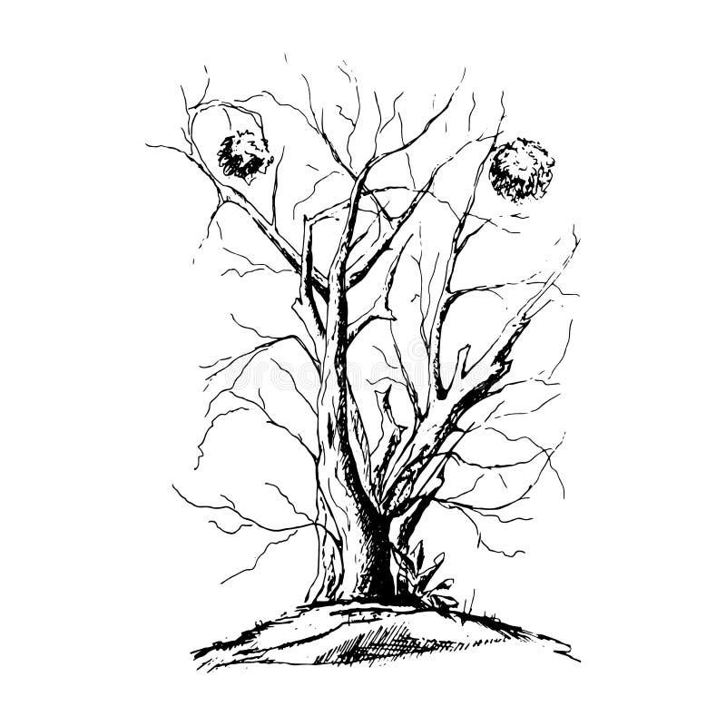 Silhueta preta da árvore isolada no fundo branco ilustração royalty free