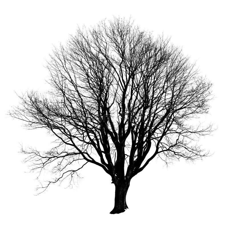 Silhueta preta de uma árvore sem as folhas no branco imagens de stock royalty free