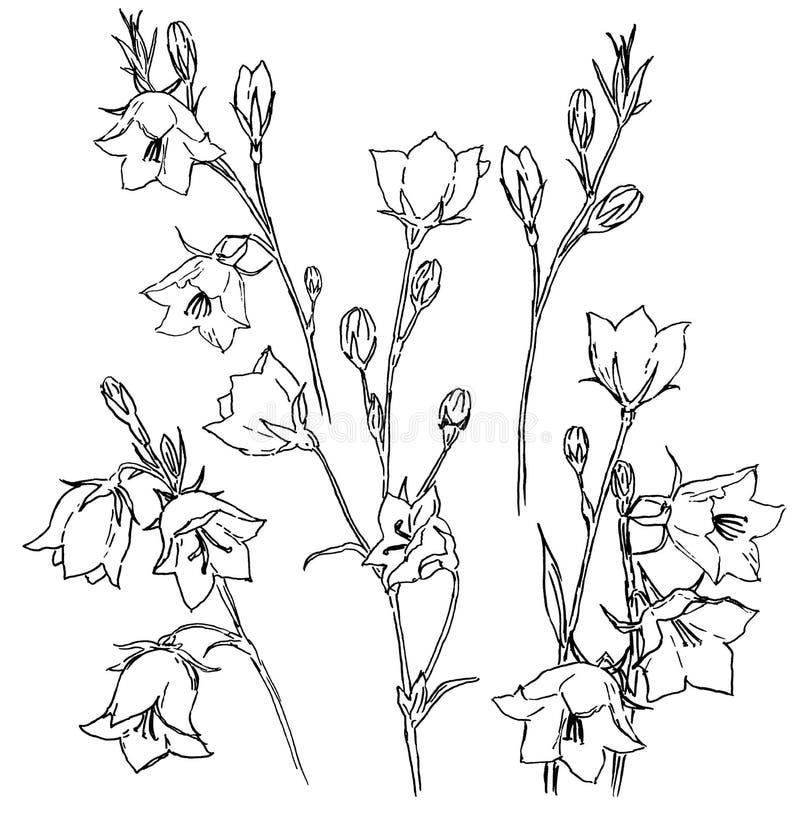 Silhueta preta desenhado à mão das campainhas isolada no fundo branco ilustração stock